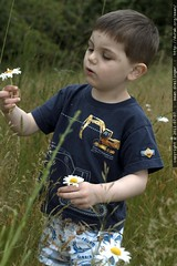picking daisies - MG 5159.JPG