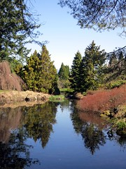 Van Dusen pond reflections (Ruth and Dave) Tags: trees reflection gardens pond view vandusen