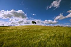 Spring field (christian&alicia) Tags: tree primavera field clouds landscape spring nikon sigma catalonia catalunya camps 1020 catalogne d90 christianalicia ilobsterit