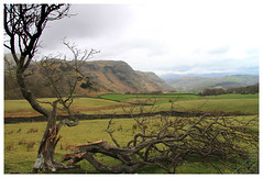 Lake District (TinaTeens) Tags: old mountain tree green water grass landscape view stones lakedistrict meadow conniston grazing