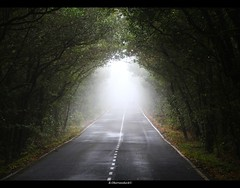 the light at the end of the tunnel (bernd obervossbeck) Tags: road mist fog forest nebel strasse jungle wald unescoworldheritage urwald lagomera kanarischeinseln canarianislands nebelwald mistyforest unescoweltnaturerbe mygearandme