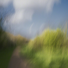 a walk in the woods (Jon Downs) Tags: pictures camera blue brown white motion blur color colour green art colors yellow downs lumix photography photo movement jon artist colours photographer image pics cream picture pic images panasonic photograph icm intentional intentionalcameramovement gf5 jondowns