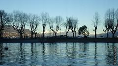 En quittant l'Isola dei Pescatori (Isole Borromee, Lago Maggiore) (2013-12-30 -45) (Cary Greisch) Tags: italy piemonte ita lagomaggiore isoladeipescatori isoleborromee carygreisch