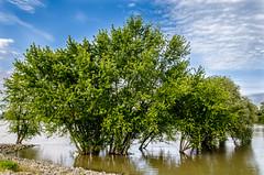 A Duna Szentendre mellett - River Duna near to Szentendre (Bela Lindtner) Tags: river nikon hungary nikkor duna 18105 magyarorszg szentendre foly d7000 nikon18105 nikkor18105 nikond7000 lindtnerbla belalindtner