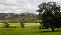 160925_Warrumbungles_5786.jpg (FranzVenhaus) Tags: trees creek countrybush plants cliffs australia mountains warrumbungles nsw water newsouthwales wilderness rocks aus
