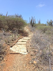 Desert Path (wellnesswildflower) Tags: pathway path walkway trail cactus landscape mountain blue sky paved rocks brush gravel rock pavers outdoors adventure travel vacation trip aruba