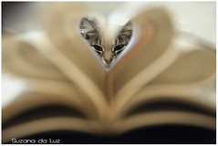 corao (Su Luz) Tags: cat book sigma gatos gata livro papel guigui gatas d90 daluz 1770mm suluz