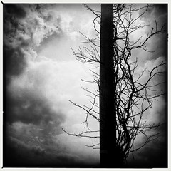 Trellisphone Pole by Jason Willis