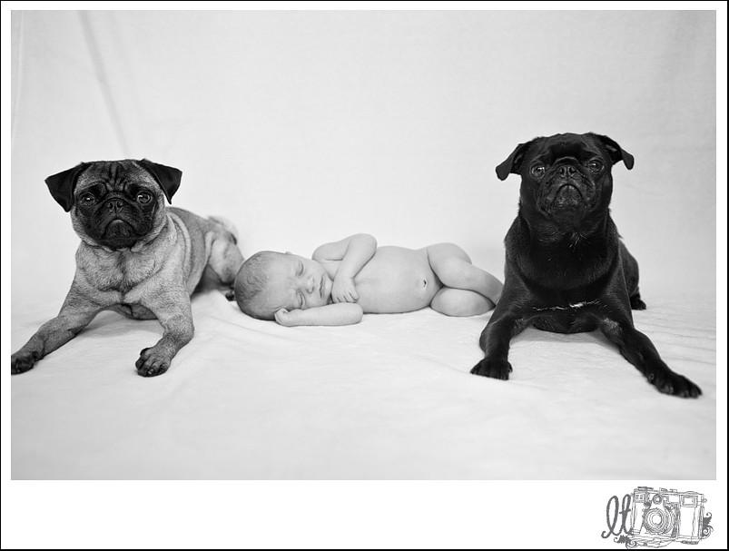kmc_blog_stl_newborn_photography_19