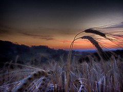 A moment before (elyum) Tags: blur field dusk wheat gradient grainy hdr xz1