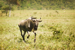 "PhotoFly Travel Club Kenya Safari 2011! • <a style=""font-size:0.8em;"" href=""http://www.flickr.com/photos/56154910@N05/5892438049/"" target=""_blank"">View on Flickr</a>"