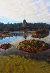 Tide pools at Point of the Arches, Olympic National Park (i8seattle) Tags: sea mist water colors clouds point coast washington arch pacific starfish arches pacificocean coastal pacificnorthwest olympics washingtonstate olympicnationalpark shi pacificcoast washingtoncoast stacks amazingcolors seastack seastacks panorma olympicmountains olympiccoast olympicnationalforest shishibeach pointofarches pointofthearches olympicforest coastpacific coastolympic washingtonphotography imagesofwashingtonstate olympicnationalparkwashingtoncoastsunset seastacksunset imagesofwashington