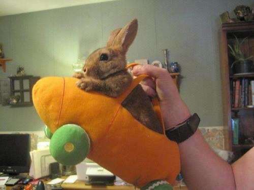 carroty