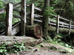 forest bridge (zenobia_joy) Tags: park wood bridge lake creek forest wooden washington log woods hiking walk rustic hike falls crescent trail national olympic peninsula barnes marymere