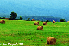 """Make hay while the sun shines..."" (Ruhi, the clicker) Tags: trees green nature grass virginia ngc farming va fields greenery farms rolls hay hayrolls luray naturephotography lurayva lushgreen us211 anawesomeshot naturewatching dryhay"