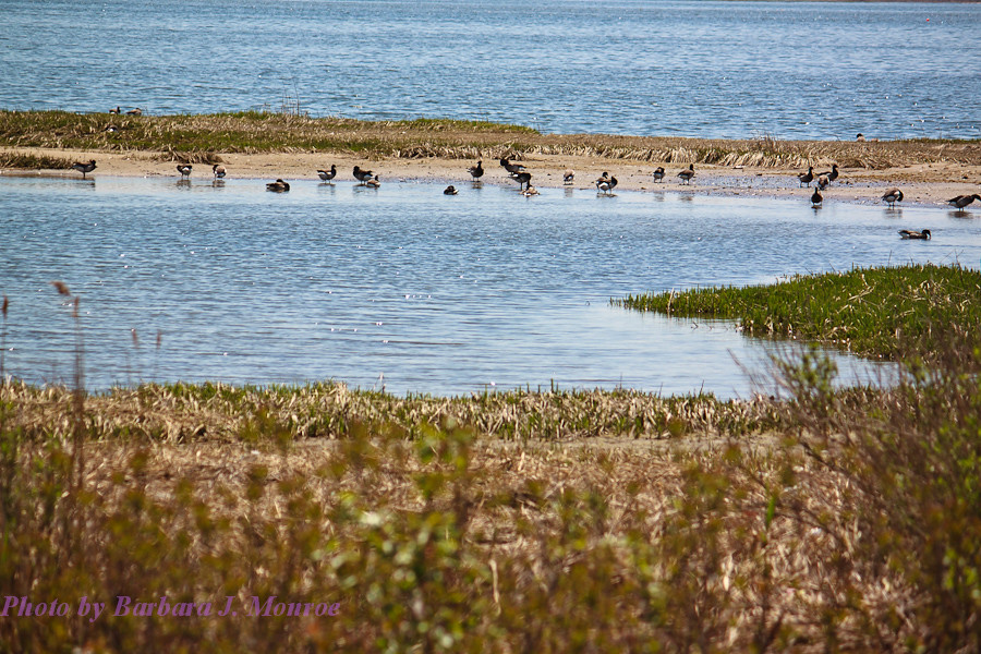 Jamaica Bay National Wildlife Refuge (4 of 24)