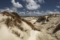 Dunes of Mason Bay (Andrew Fritz) Tags: newzealand island hdr steward stewardisland masonbay pfstool