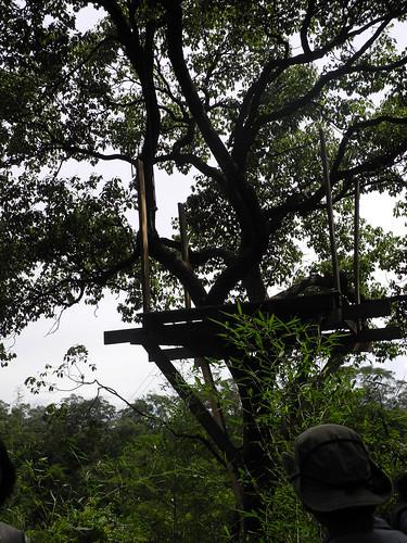 這裡才是自然谷用以環境教育的大樟樹。
