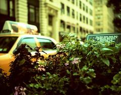 New York (Paulo Csar Len Palacios//**) Tags: mamiya7 crossproceced epsonv700newyork35mmfilmpelculablackwriteblancoynegrocanonelanef24105f4lisusm