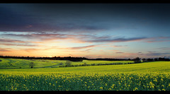Rapeseed Spring Sunset [Explore #6 & Front Page] (RobbieB88) Tags: uk summer england sky sun canon landscape countryside spring colours britain fields hertfordshire rapeseed springwatch buntingford 550d bbcspringwatch