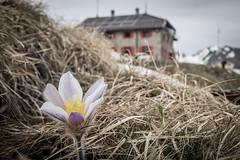 Rifugio Citt di Busta / 2'480m (<<<...Buddhamountain...) Tags: skiing cai touring cabane rifugio nufenen goms valformazza blinnenhorn buddhamountain cittadibusto