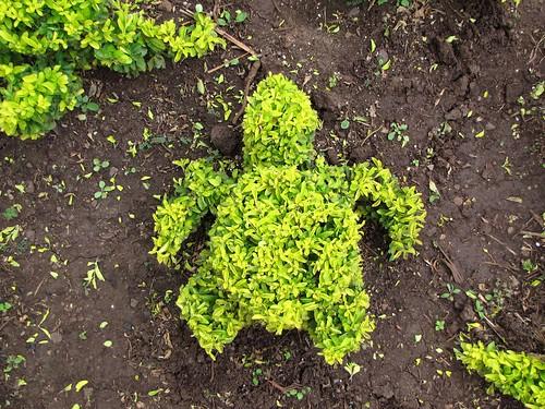 turtle-shaped bush