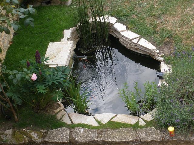 mon p'tit bassin dans mon p'tit jardin - Page 2 5822283532_99e62cfa75_z