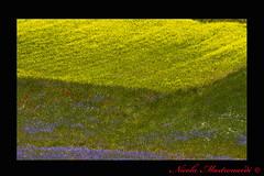 (Nicola Mastronardi) Tags: red color yellow canon eos is colore natura giallo 7d di l rosso 70200 ef f4 norcia castelluccio canoneos7d canonef70200efislf4