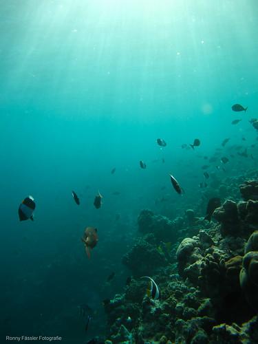 Malediven 2010 -1853