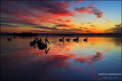 Magic Waterways (southern_skies) Tags: sunset lake pelicans reflections nsw waterways natureplus allnaturesparadise