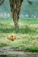 "PhotoFly Travel Club Kenya Safari 2011! • <a style=""font-size:0.8em;"" href=""http://www.flickr.com/photos/56154910@N05/5892408709/"" target=""_blank"">View on Flickr</a>"