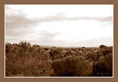 Paesaggi della Toscana (gardenia967) Tags: pictures trip vacation holiday color travelling art tourism beautiful composition fun photo focus exposure photos pics snapshot picture pic tourist moment capture toscana visiting toscane saturnia colline photooftheday picoftheday pitigliano bolgheri scansano allshots travelgram instagood instago tagsforlikescom travelingram mytravelgram instatraveling igtravel instapassport instatravel