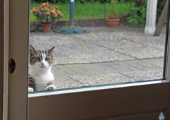 Katja at the kitchen door ~ Katja bij de keukendeur (Swaentje5) Tags: pets window netherlands cat kat nederland poes katja raam drenthe huisdieren oosterhesselen hww windowwednesdays