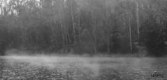 Tranque de la luz (Lpez.Fotografa) Tags: canon placilla valpo valparaiso photographer photography forest valparadise fotografia ladscape paisaje airelibre 650d blancoynegro monocromatico neblina fog blackandwhite blackwhite