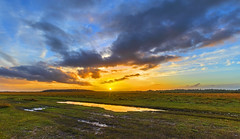 Sunset Puddle (nicklucas2) Tags: newforest nature landscape grass sunset milkham cloud puddle