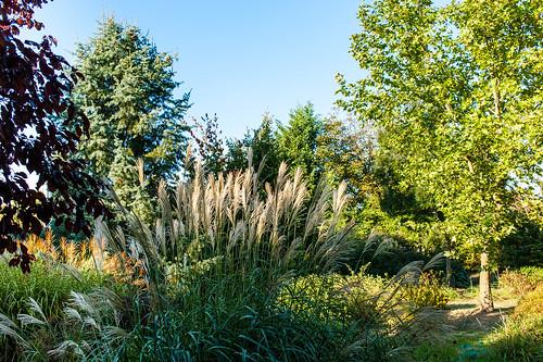 Díszfüvek, ornamental grass