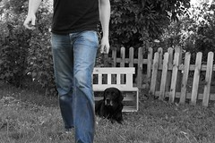 (Tease 2 0 1 0) Tags: bw dog me canon garden bench 50mm blackwhite labrador bank hund sw bluejeans ich garten 50mmf14 bluejean schwarzweis project365 365project 156365 eos5dmkii 2011yip