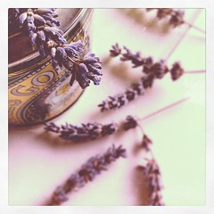 lavender & golden syrup