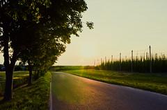 Sonnenuntergang mit Hopfen | Sunset With Hop (macsoapy) Tags: sunset saxony sachsen lensflare hop hopfen reichenbach batzdorf sonnenunergang d7000