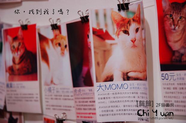 貓書房12.jpg