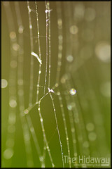 Bokeh web (Simon Bone Photography) Tags: macro closeup focus bokeh spiderweb sigma105mm wwwthehidawaycouk canoneos7d