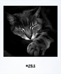 "#Dailypolaroid of 4-7-11 #283 #fb • <a style=""font-size:0.8em;"" href=""http://www.flickr.com/photos/47939785@N05/5909210308/"" target=""_blank"">View on Flickr</a>"