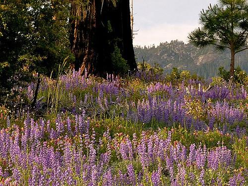 Foresta Field of Dreams