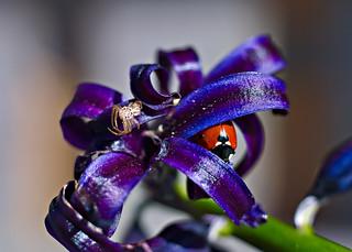 Ladybug and spider
