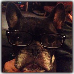 Max with glasses!!! #max #maxthedog #frenchie #frenchbulldog