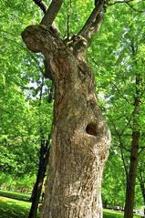 La Vierge Marie (Pierre thier) Tags: sculpture abstrait laviergemarie treesubject artfiguratif d300s nikond3oos