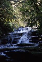 Leura Cascades, Blue Mountains National Park (Drew_austin) Tags: longexposure bluemountains waterfalls cascades streaming