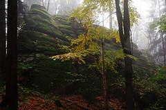 Brenfels (boarischa_krautmo) Tags: geologie