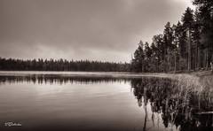 Quiet (salas-3) Tags: nationalpark suomi nikon quiet monochrome photography woods forest lake landscape morning finland place