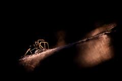 Phobia (melnikovee) Tags: spider macro art phobia fear web light nature black dark low key